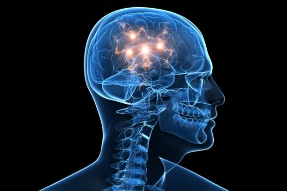 what-do-you-know-about-the-human-brain-853894269-oct-18-2012-1-600x400