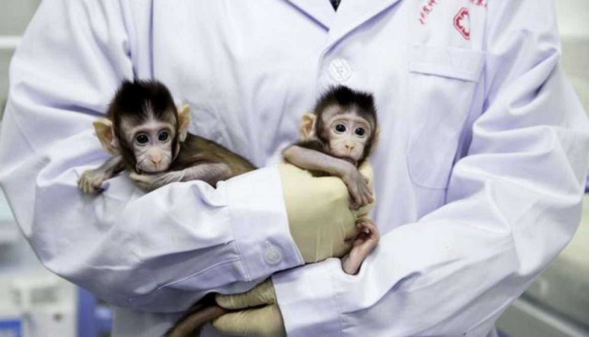 china-cloned-monkeys_2408d008-018d-11e8-8651-33050e64100a