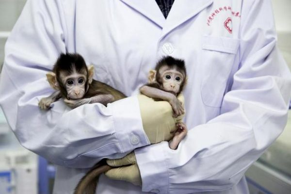 Scientists have cloned monkeys in China